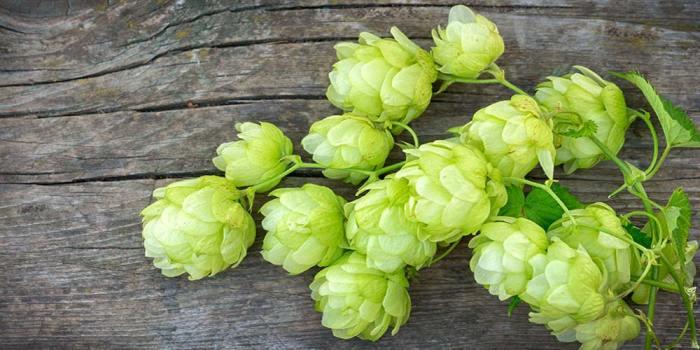 simcoe-hops